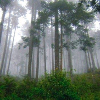 tipos-bosques-guatemala-latifoliado-altura