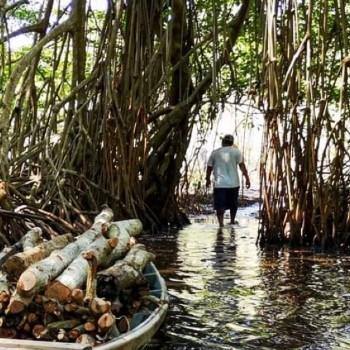 tipos-bosques-guatemala-manglares