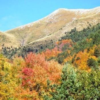 tipos-bosques-guatemala-mixtos