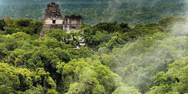 tipos-bosques-guatemala