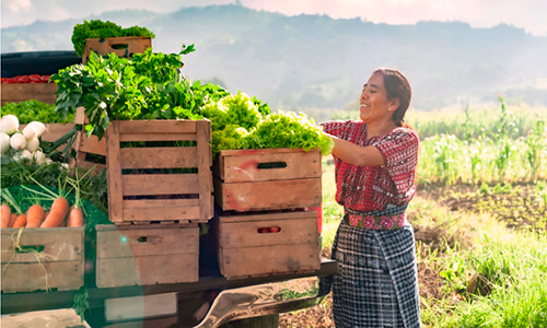 Agricultura en Guatemala - Foto El Ágora diario del agua