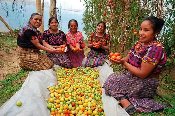 Agricultura en Guatemala - Foto European Union External Action, Europa EU