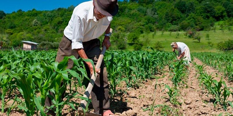 Agricultura en Guatemala - Foto La hora Zero