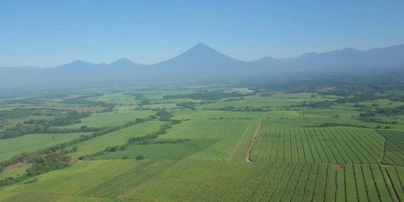 Beneficios que ha traído la producción del azúcar a Guatemala