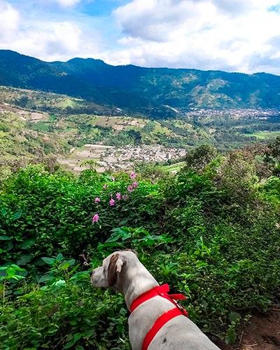 Descripción de la foto - Perro sentado frente a las orillas del pueblo de San Antonio Aguas Calientes, rodeado de árboles, montañas y volcanes - crédito de la foto - @chuchoviajero - Instagram