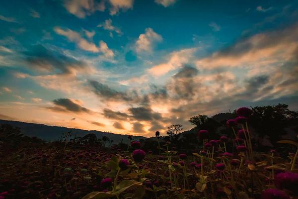 Descripción de la foto - Vista de un campo de flores, dunrate el atardecer, en los alrededores de San Antonio Aguas Calientes - crédito de la foto - @ivanchoos - Instagram
