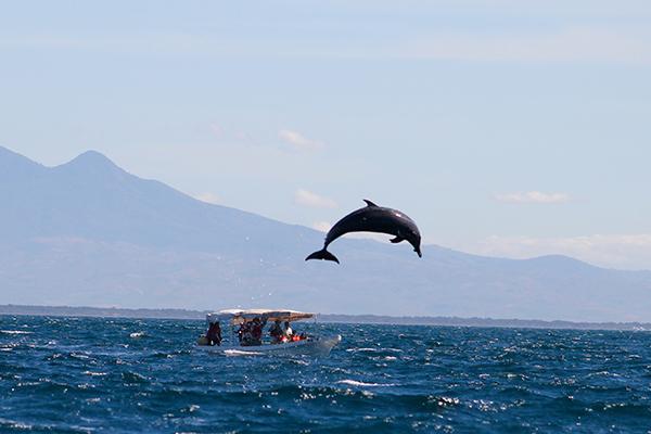 Descripción de la foto delfín saltando en aguas guatemaltecas, al fondo se ven las montañas del país y una embarcación cercana - Crédito El PNUD en Guatemala