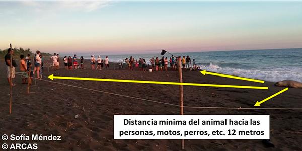 Descripción de la foto explicación del distanciamiento entre el elefante marino con el público ubicado en la playa - Crédito María de Flores