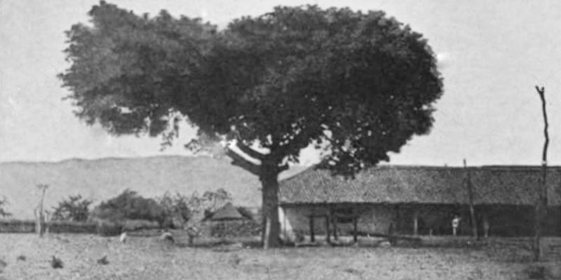 Historia de la Ceiba Pentrada de Chiquimula