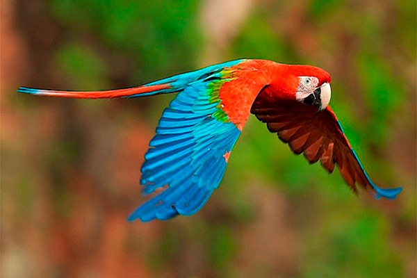 La Guacamaya Roja en Guatemala - foto - Cultura Colectiva News