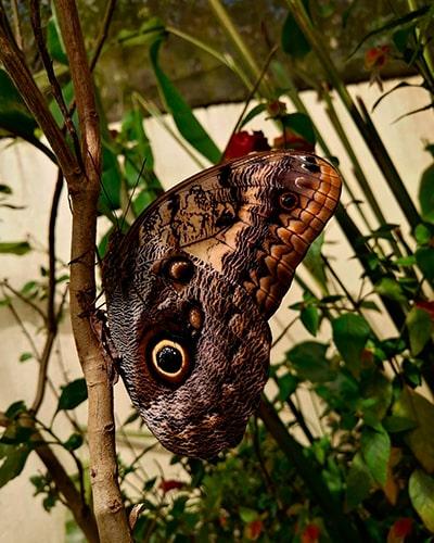 Descripción de foto - Acercamiento de una mariposa dentro del mariposario de la reserva. - Descripción de foto - @yess_2391- Instagram