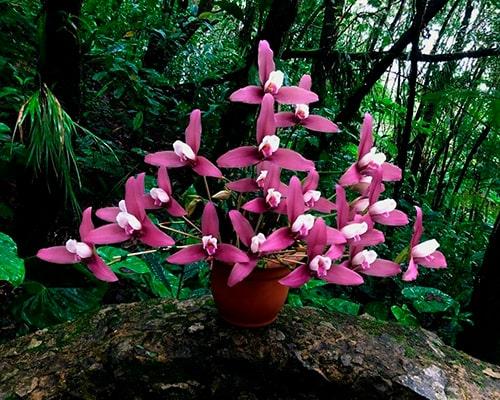 Descripción de foto -Arreglo de orquídeas color rosa hecho por Orquigonia . - Crédito de foto - Orquigonia