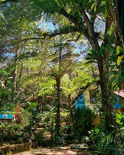 Descripción de foto - Exterior de las instalaciones de Orquigonia, rodeado de bosque y naturaleza. - Crédito de foto - Orquigonia