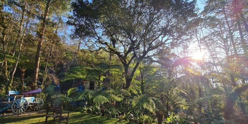 Historia de Orquigonia, parque ecológico de orquídeas en Guatemala