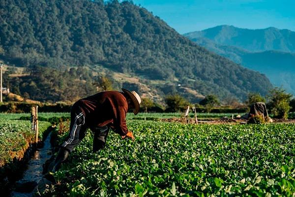Descripción de foto - Hombre en el campo viendo las plantaciones de hortalizas. - Crédito de foto - @anexismorales - instagram