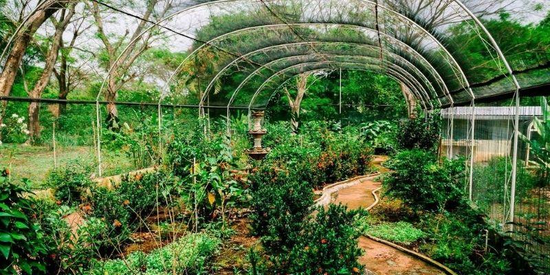 Descripción de foto - Interior del mariposario de la Guate Butterflies. - Descripción de foto - Forum Guatemala-2