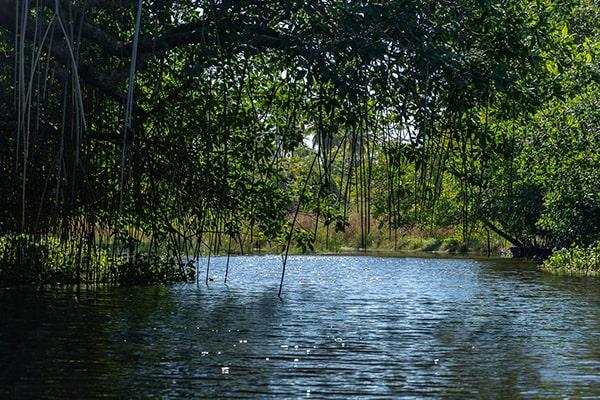 Descripción de foto - Vista de un Río de Guatemala en donde se ven ramas y árboles -Crédito de foto - Kyle Price