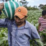 Significado de «hacer la campaña» en Guatemala