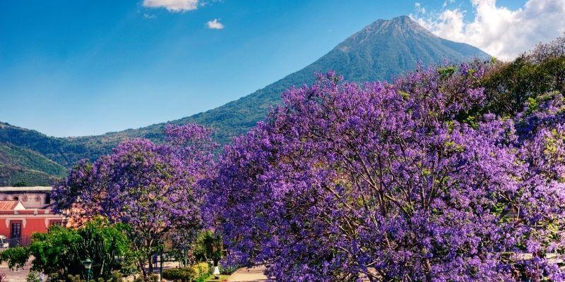 Descripción de foto - El Parque Central de Antigua Guatemala con el volcán Agua enmarcada por árboles de jacaranda. - Crédito de foto - Al Argueta