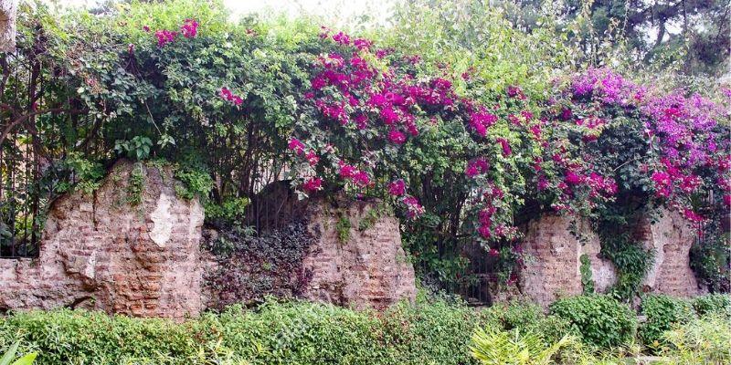 Descripción de foto - Muro en el jardín con flores en flor en Antigua, Guatemala. - Descripción de foto - Marcel Rommens