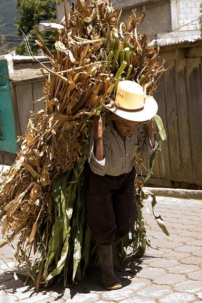 Descripción de foto - anciano agricultor llevando su cosecha cuesta arriba. - Crédito de foto - Design Pics Inc
