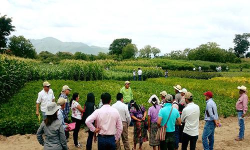 Descripción de foto - hombres dándole una charla a pobladores de San Jerónimo Baja Verapaz en un campo de cultivo agrícola. - Crédito de foto - ICTA Guatemala
