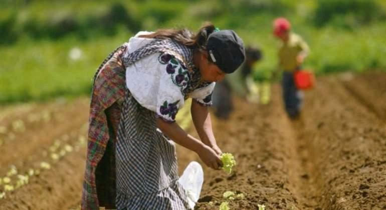 Día Nacional del Ingeniero Agrónomo en Guatemala-
