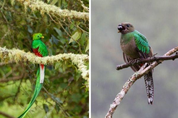 El Quetzal guatemalteco.