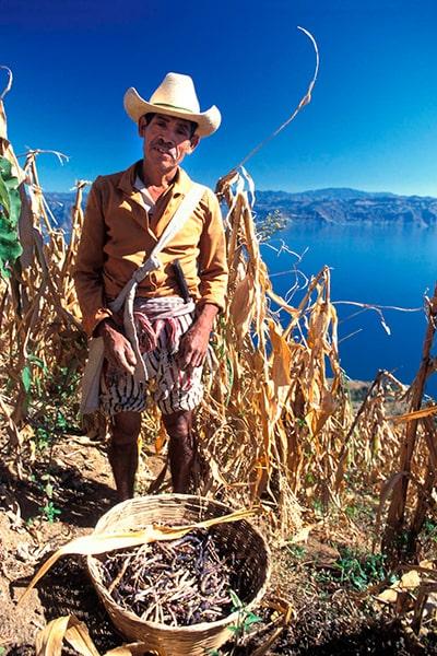 Por qué es tan importante la milpa en Guatemala_