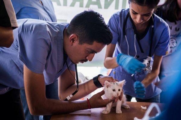Historia de la Facultad de Medicina Veterinaria y Zootecnia de Guatemala-1