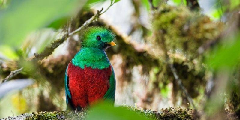 Lugares para ver Quetzales en Guatemala