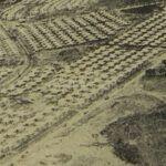 Historia de la colonia Primero de Julio en Guatemala